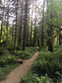Hiking the Hoh River Trail.